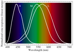 Diagram responsifitas sel kerucut S,M,L berdasarkan spektrum warna.
