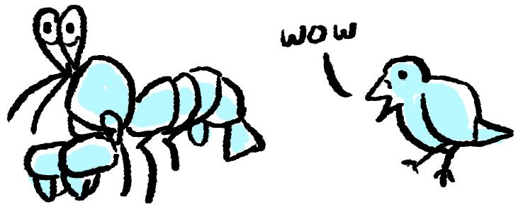 Mantis shrimp dan burung